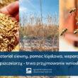 Materiał siewny, pomoc klęskowa, wsparcie dla pszczelarzy. Trwa przyjmowanie wniosków.